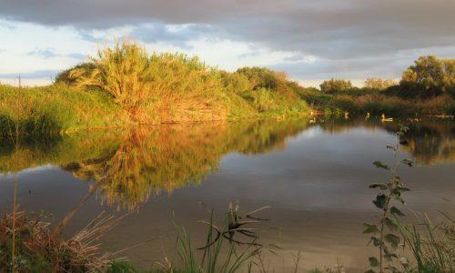 Zona humida
